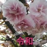 wpid-wp-image-1868316760.jpg